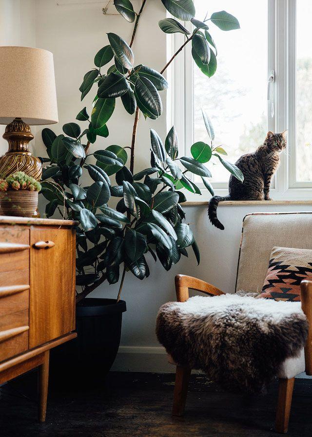 my scandinavian home: Beautiful inspiration for plant lovers - Groen wonen. Urban jungle. Voor meer planten en bloemen inspiratie kijk ook eens op http://www.wonenonline.nl/interieur-inrichten/planten-bloemen/
