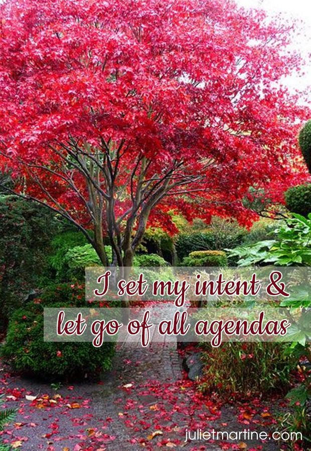 I set my intent and let go of all agendas.  #ManifestationIntelligence