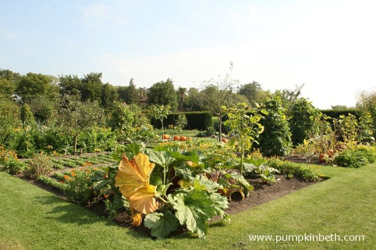 Bees are important pollinators for fruit and vegetables.  Here's the lovingly tended Vegetable Garden at Loseley Park in September.