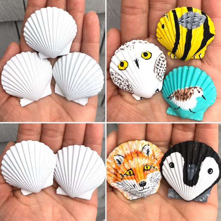 DIY blank seashell (set of 5) blank scallop shell