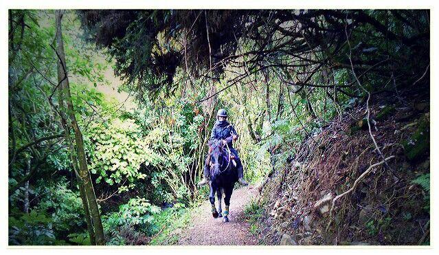 #highviewlinda #trailride #newzealand #horsephotography #sarahthrasher #elementhorsemanship #kiwicowgirl