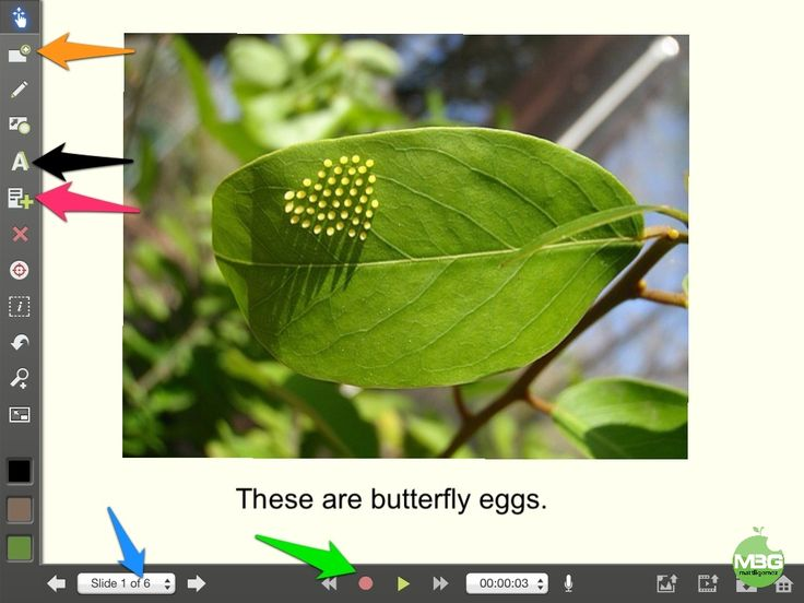 Butterfly Life Cycle Video with Explain Everything App | mattBgomez