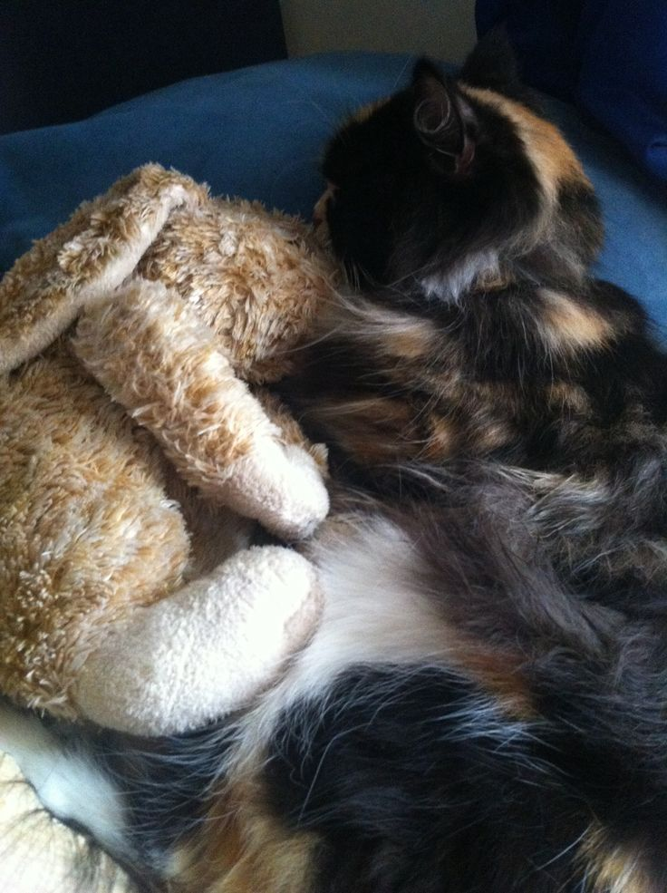 Mr. Finchley (the bunny) and Verona (the calico) are snuggling through the rain