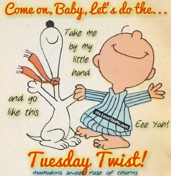 Funny Tuesday Quotes: Best 25+ Happy Tuesday Quotes Ideas On Pinterest