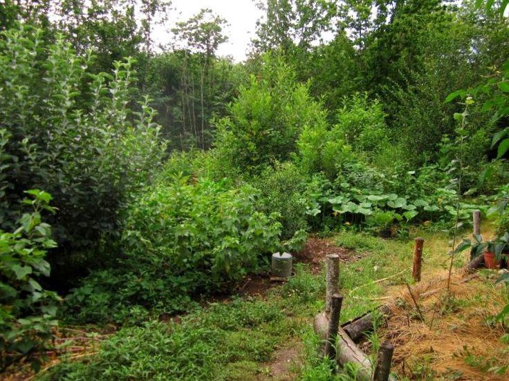 La forêt comestible est un agrosystème complexe créé par l'homme, tendant à imiter un écosystème forestier naturel en associant une large diversité de plantes utiles.    La permaculture cherche à développer ce type de système, potentiellement très productif et beaucoup plus résilient qu'un système simple.