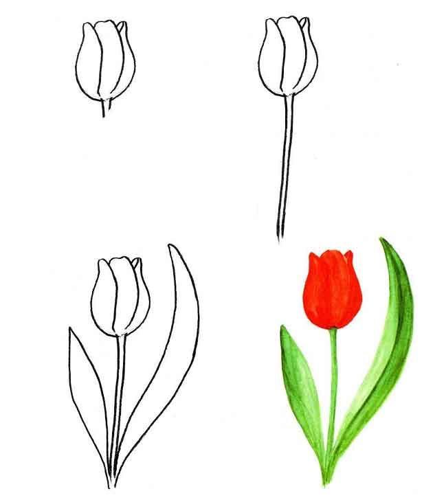 замечательную коллекцию картинки тюльпан как нарисовать десерт был