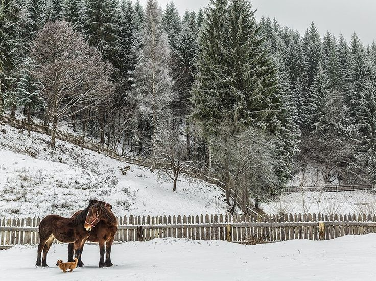 Horses and Dog Image, Romania - National Geographic Photo of the Day