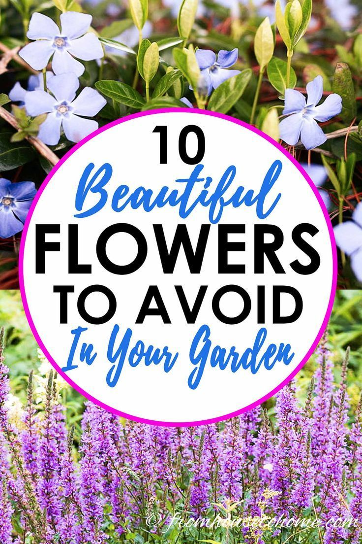 Diese Invasiven Pflanzen Sind Alle Schon So Sie Versucht Sie In Ihrem Garten Zupflanzen Find Out Pflanzen Gartenarbeit Mehrjahrige Pflanzen