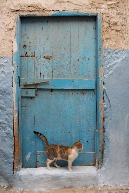Exterior door with cat waiting
