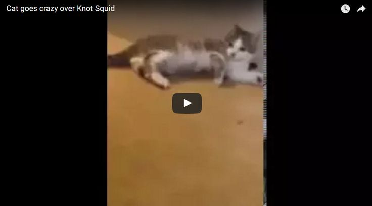Cat goes Crazy over knot Squid Video
