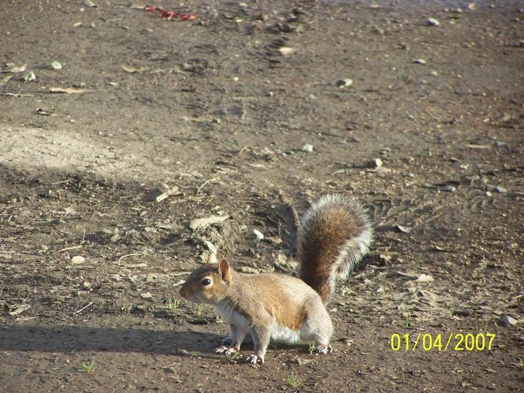 Squirrel!: Squirrels, Lens