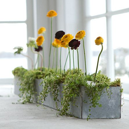"Hand-crafted exclusively for terrain by a Philadelphia metal artist, these planters are constructed from durable galvanized steel and finished in a gently weathered patina. Their lengthy shape makes them the perfect centerpiece when filled with forced bulbs or petite plants.  - A terrain exclusive - 24 gauge galvanized steel - Indoor or outdoor use - Handmade in Philadelphia, USA  5""W, 48""L, 4""D"