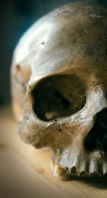 A skull like the one Hamlet picked up before he found out who was being buryed in the grave. It was Ophelia that was gonna be laid in the ground.