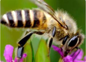 22222222222 - Active Jellybush 17+ Honey (400g)