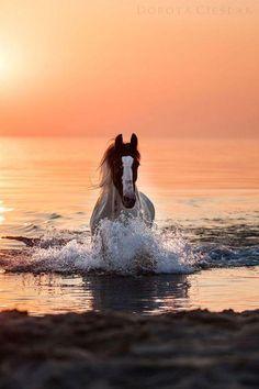 Cheval, la mer et couché de soleil.