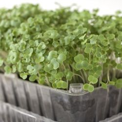 Micro Garden Ideas clever design for an easy access fragrant herb garden would work well for a No Garden No Problem Diy Micro Greens Are Easy Fun And Crazy Nutritious
