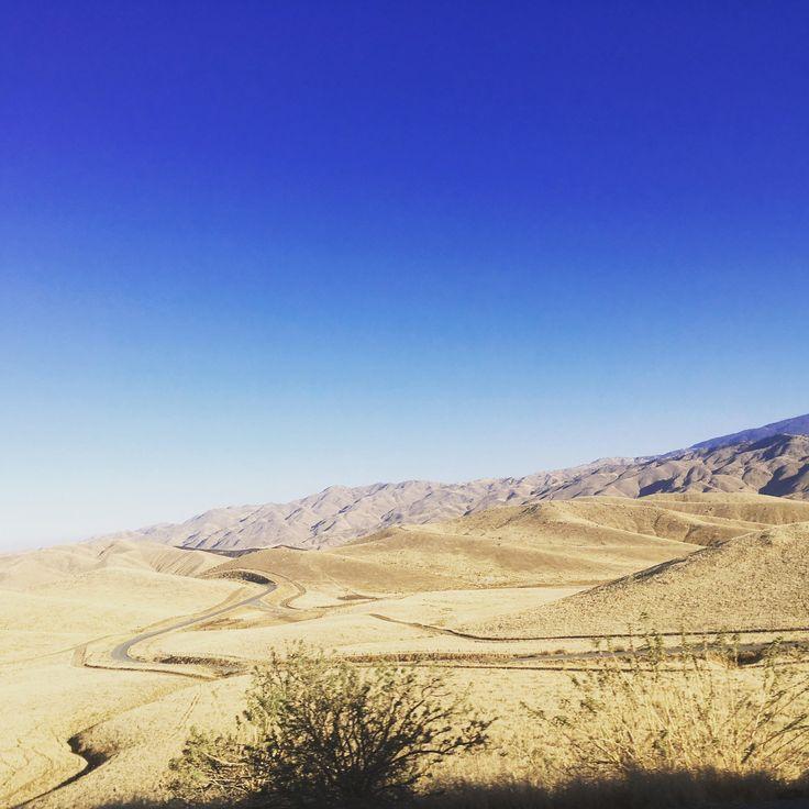 Mojave Desert Native Plants: Best 25+ Mojave Desert Ideas On Pinterest