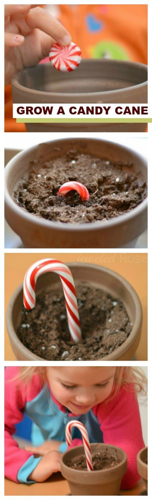 Grow a Candy Cane and WOW the kids!  My kids loved this simple bit of magic.