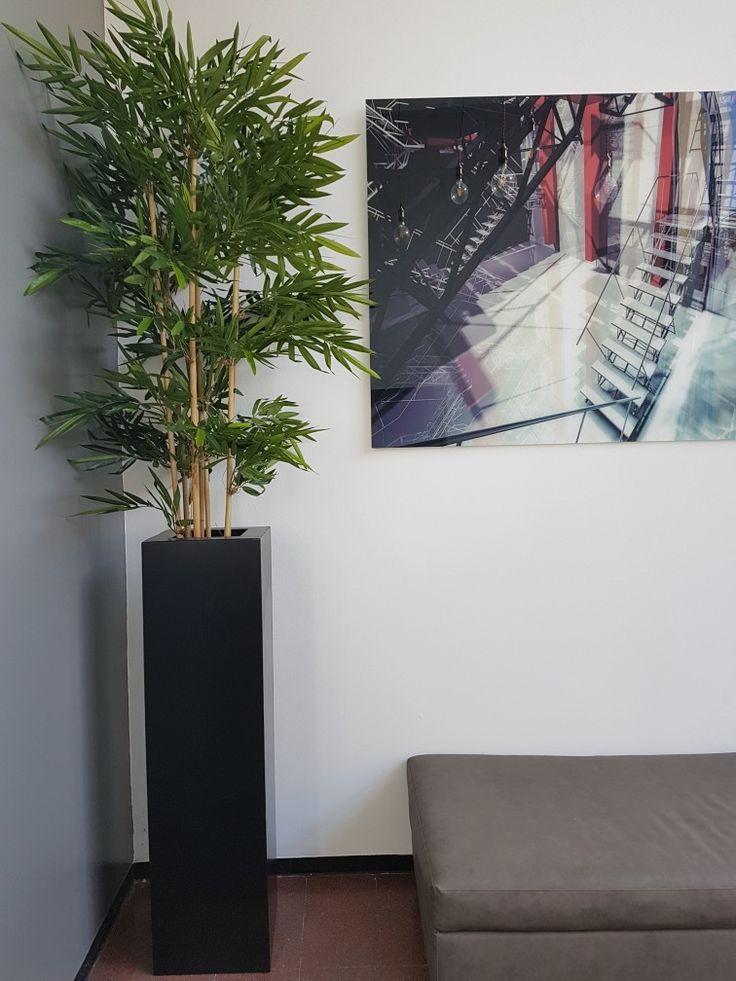 Oltre 25 fantastiche idee su arredamento piante da interni - Arredamento da interni ...