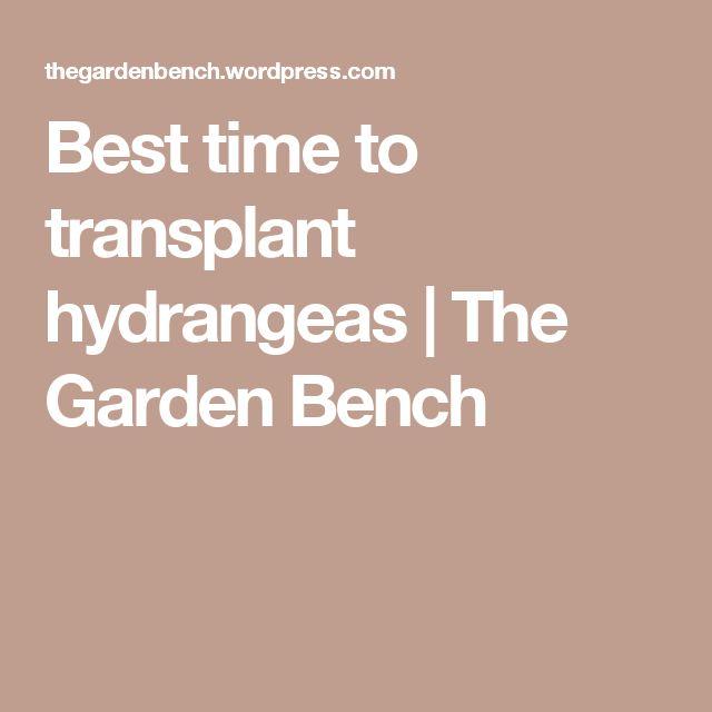 Best time to transplant hydrangeas | The Garden Bench