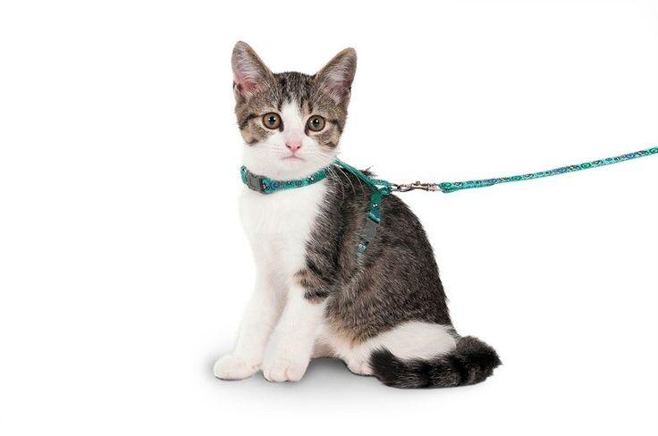 • Regulerbar kattesele med klipslås • Passer til små katter og kattunger • Størrelse: Halsomkrets: 14-21cm, Mageomkrets: 19-29cm • Leiebånd med lett karabinkrok: 1,16m langt, 10mm bredt