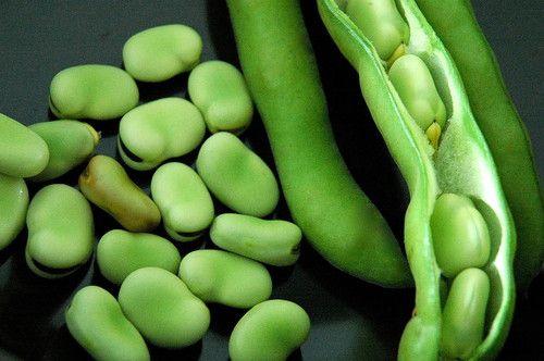 Stereo Bush Broad Fava Bean - 50 Seeds