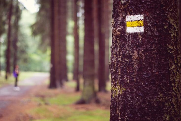 follow the yellow - Three in Děčín