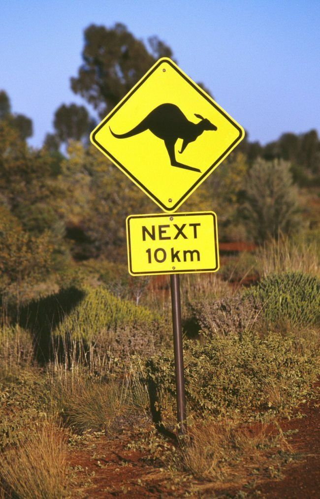 Honeymoon in Australia; a top 10 'must see' - Spot Kangaroos!