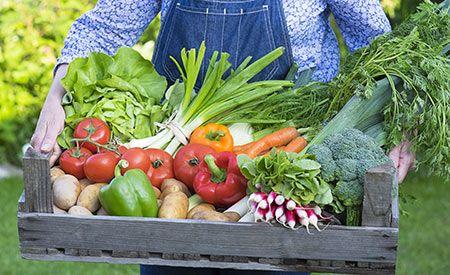 (Zentrum der Gesundheit) - Bio-Lebensmittel haben gegenüber konventionell erzeugten Lebensmitteln zahlreiche Vorteile – gesundheitliche, ökologische und natürlich auch ethische. Da die Mainstream-Medien immer wieder das Gegenteil behaupten und die Vorgehensweisen der konventionellen Landwirtschaft als notwendig darstellen, könnte es sein, dass auch Sie glauben: Bio ist nicht wirklich besser. Lassen Sie sich nicht für dumm verkaufen! Sogar jene Studie, auf die sich die Medien in ihrer…
