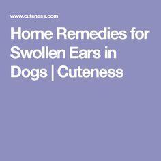 Home Remedies for Swollen Ears in Dogs | Cuteness