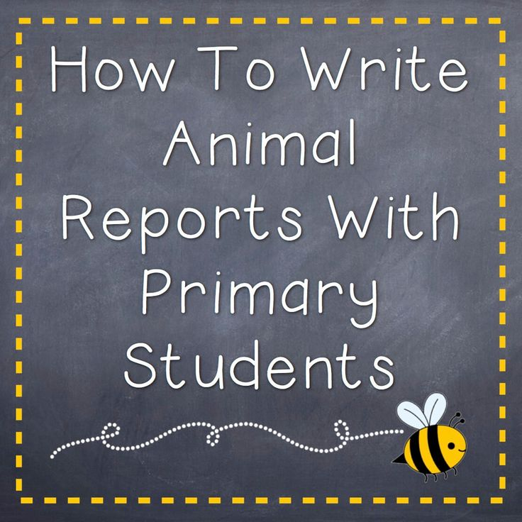 I love teaching first, second, and third grade students about animals and I find students love to write animal reports! Animal research projects are a great way to introduce students to the report writing process or have them practice their report writing skills. Using tiered research templates provides students with the support they need as …