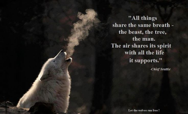 wolf spirit quotes - Google Search