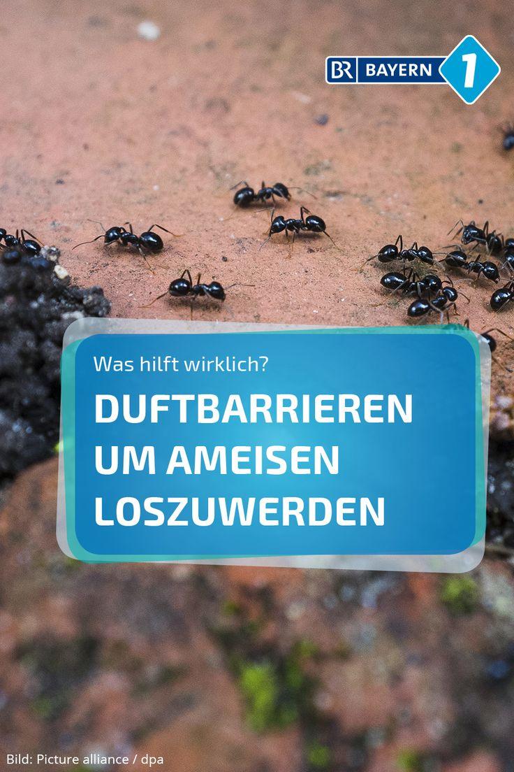Ameisen Küche Hausmittel | 7 Best Hausmittel Gegen Ameisen Images On ...