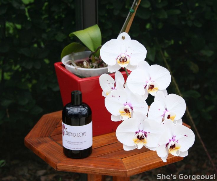 Orchid Love The World's Best Orchid Food - Organic and natural Plant Foods and Fertilizers |