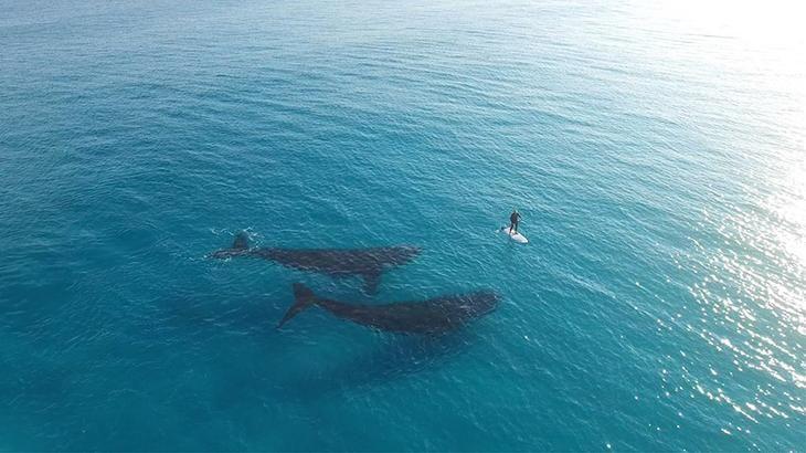 Паддл-бординг с китами в городе Эсперанс, штат Западная Австралия
