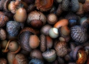 Acorns.: Autumn Acorn, Inspiration, Colors, Brown, Autumn Color, Color Palette, Photo, Fall Color