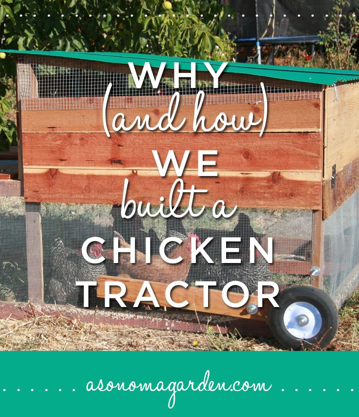 Discover Why and How we decided to build a chicken tractor. Easy plans and details on why it's so beneficial to have your chickens in a mobile coop.