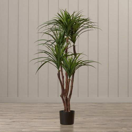 Found it at Wayfair - Seabeck Tropical Yucca Tree in Pot