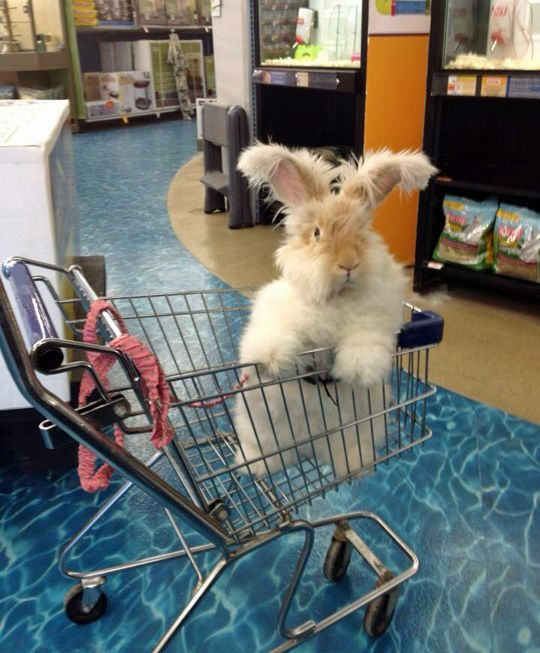 """""""Excuse me, what aisle are the carrots in?"""""""