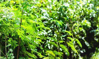 PARA CORTAR ÁRVORES É PRECISO AUTORIZAÇÃO belaitanhaem.blogspot.com.br A poda e o corte de qualquer árvore, nativa ou exótica, dentro ou fora do imóvel, são disciplinados pelo município. O infrator pode sofrer multa e um processo judicial. Em ...