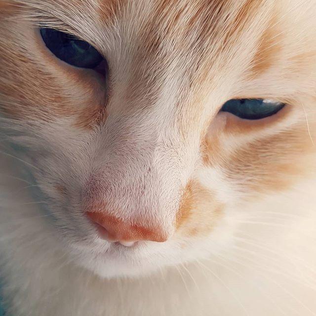 Blue eyes 💙 #albertchamus #cats #catsofinstagram
