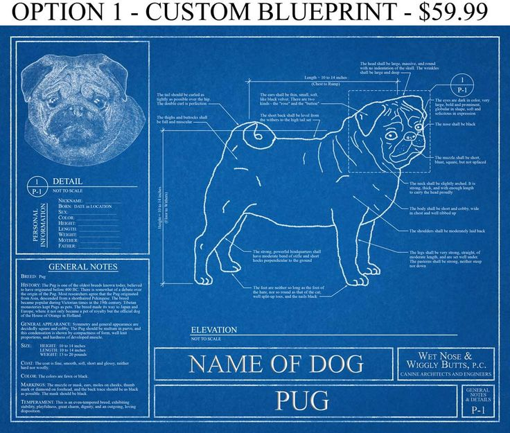 Personalized Pug Blueprint / Pug Art / Pug Wall Art / Pug Gift / Pug Print / Pug Poster by WetNoseWigglyButts on Etsy https://www.etsy.com/listing/248667654/personalized-pug-blueprint-pug-art-pug