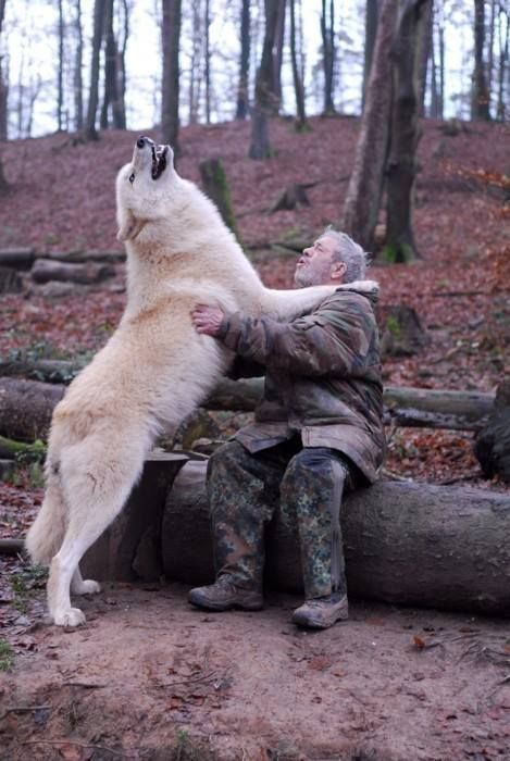 Former soldier & adventurer turned wolf fanatic & researcher,
