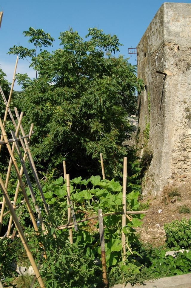 Ventimiglia (IM)  un tratto di mura (XVI sec.)