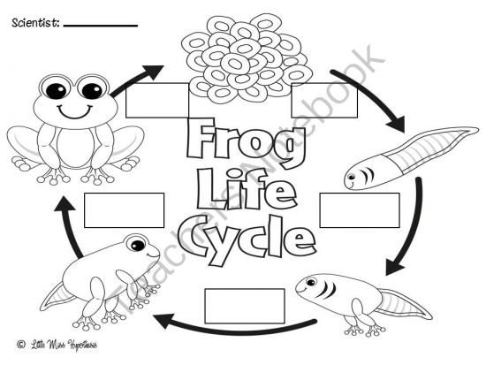 67 best images about Education---Life Cycles/Frog/Ladybug ...
