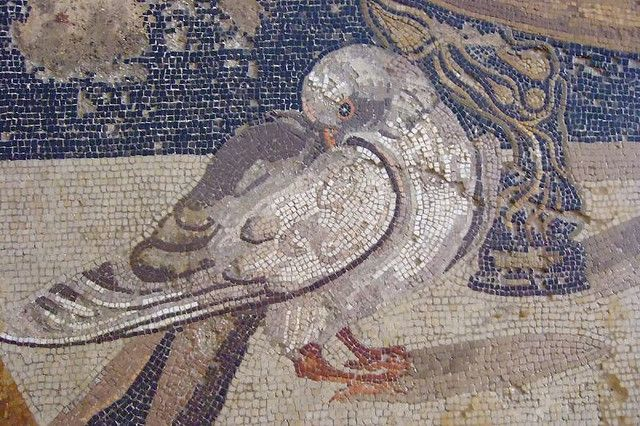 Mosaic depicting doves drinking from a bowl, probably after an original mosaic by Sosus of Pergamon - Mus.Arch.Naz. Napoli - by mharrsch