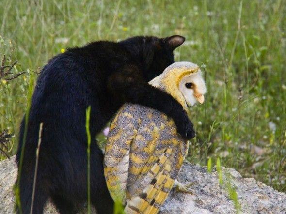 Unlikely Animal Friends - Fum the house cat is hugging his best friend Gebra the barn owl.