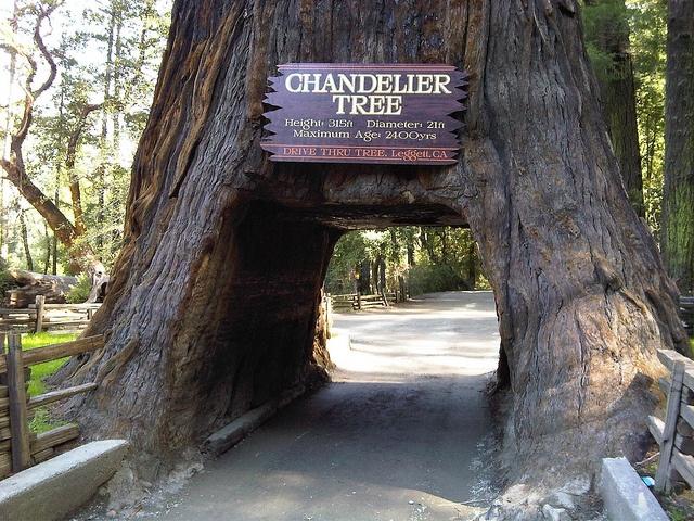 78 best Redwood National & State Parks, CA images on Pinterest ...