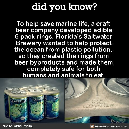 To help save marine life, a craft beer company developed edible 6-pack rings. Florida's Saltwater Brewery wanted to help protect the ocean from plastic pollution, so they created the rings from beer byproducts and made them completely safe for both...