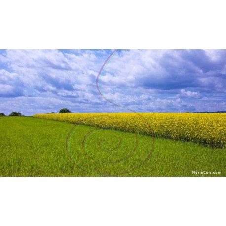 Landschaft in Frühling